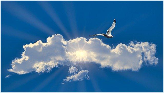 seagull-5339266_640
