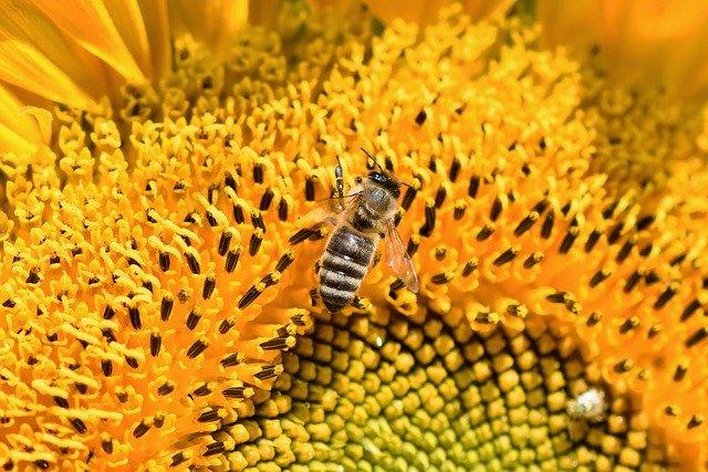 sunflower-3554567_640